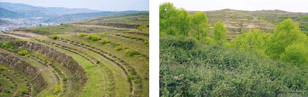 v8棋牌连续3年助力百万森林计划改善130万平方米荒漠