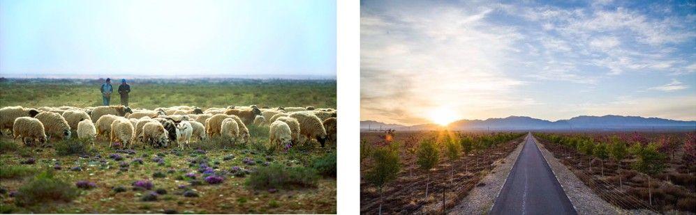 赫基连续3年助力百万森林计划改善130万平方米荒漠